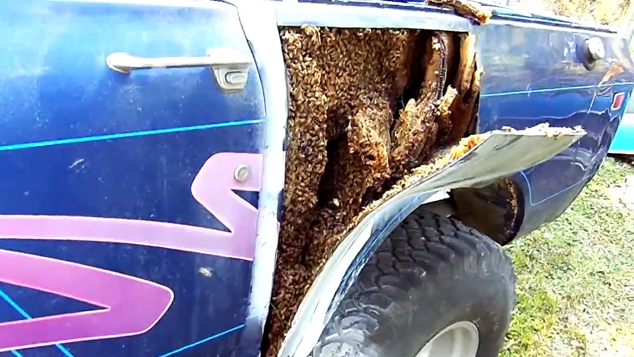 What This Guy Finds Under The Fender of His Truck is Quite Disturbing