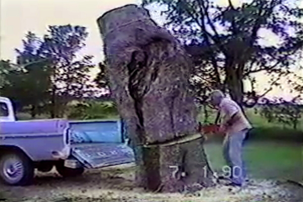 set-up-man-saws-tree-crashes-into-bed-of-truck